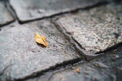 在湿老花岗岩路面特写镜头的秋天叶子 图库摄影