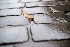 在湿老花岗岩路面特写镜头的秋天叶子 库存照片