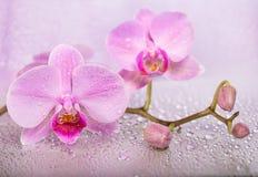 在湿背景的花 库存图片