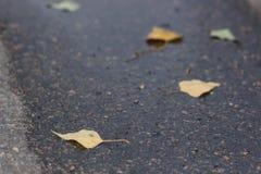 在湿路的槭树叶子 免版税库存图片