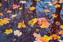 在湿路面的色的叶子 库存图片