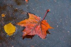 在湿路面的色的叶子 免版税图库摄影