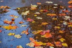 在湿路面的色的叶子 图库摄影