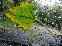 在湿玻璃水平的下落的叶子 免版税库存照片