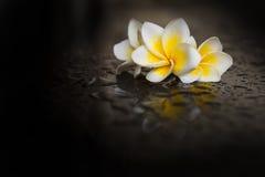 在湿黑背景的木兰花 免版税库存照片