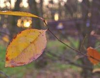 在湿forrest的为时叶子在日落 免版税库存图片