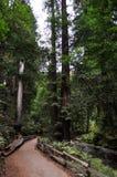 在溪旁边的道路在深森林里 免版税库存图片