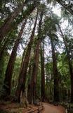 在溪旁边的道路在深森林里 库存照片