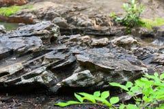 在溪旁边的细节岩石 免版税库存照片