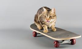 在滑板的猫 库存照片
