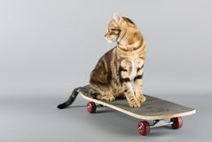 在滑板的猫 免版税库存图片