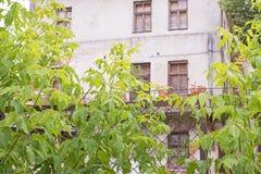 在滤网篱芭和大绿色植物后的被放弃的房子 库存图片