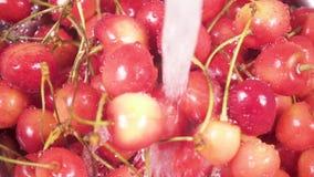 在滤锅的慢动作樱桃在水下 股票录像