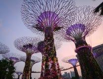 在滨海湾公园的Supertree在新加坡 免版税库存图片