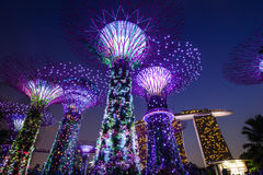 在滨海湾公园的Supertree在新加坡 免版税库存照片