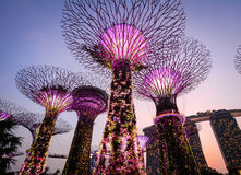 在滨海湾公园的Supertree在新加坡 免版税图库摄影
