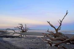 在漂流木头海滩的日出 图库摄影