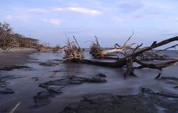 在漂流木头海滩3的日出 库存照片