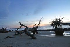 在漂流木头海滩的日出 免版税库存图片