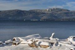 在漂流木头的冬天雪 免版税库存照片