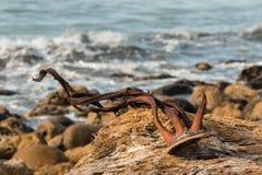 在漂流木头的海带干燥 库存图片