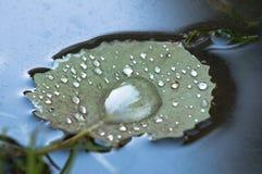 在漂浮水表面上的叶子的雨珠 库存图片