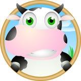 在漏洞的逗人喜爱的母牛微笑 免版税图库摄影