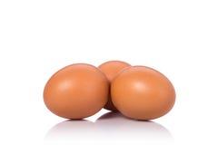在演播室射击的新鲜的鸡鸡蛋 查出在白色 免版税库存照片