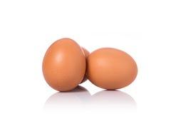 在演播室射击的新鲜的鸡鸡蛋 查出在白色 免版税图库摄影