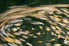 在漩涡水附近的秋天 免版税库存照片