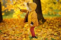 在漫步期间的小男孩在森林里晴朗的秋天天 库存照片