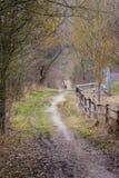 在漫步狂放的自然Lan的森林森林白天步行的土道路 库存照片