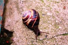 在漫长的路2的蜗牛 免版税库存图片