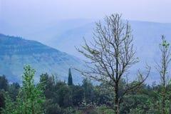 在潘奇加尼森林附近的风景 库存照片