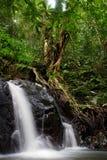 在潮湿森林里 免版税图库摄影