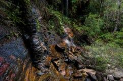 在澳大利亚布什的瀑布 库存图片
