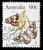 在澳大利亚打印的邮票显示木白色蝴蝶 图库摄影