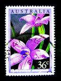 在澳大利亚打印的邮票显示紫色elythranthera emarginata花的图象在价值的在36分 免版税库存照片