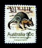 在澳大利亚打印的邮票显示被昂首的钉子被盯梢的鼠的图象在价值的在30分 库存图片