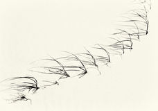 在澳大利亚海滩的沙丘草 免版税库存图片