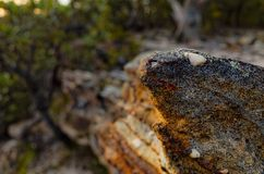 在澳大利亚灌木的岩层 免版税图库摄影