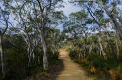 在澳大利亚灌木的火足迹 库存图片
