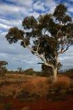 在澳洲pilbara视图间 免版税库存照片