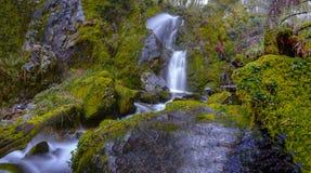 在瀑布下的生苔岩石 库存照片