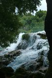 在瀑布之下的连续结构树 免版税库存图片