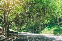 在瀑布旁边入口的大树  免版税图库摄影