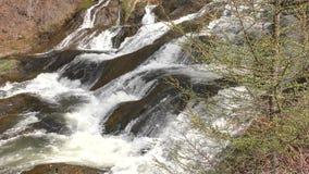 在瀑布旁边的芽 影视素材