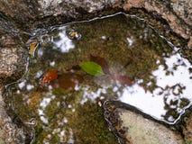 在瀑布水坑的反射  图库摄影