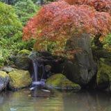 在瀑布池塘的红槭树 免版税库存图片