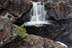 在瀑布的前面的年轻杉木,瑞典 库存图片